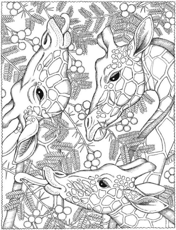 28 best adult coloring pages images on Pinterest  Coloring books