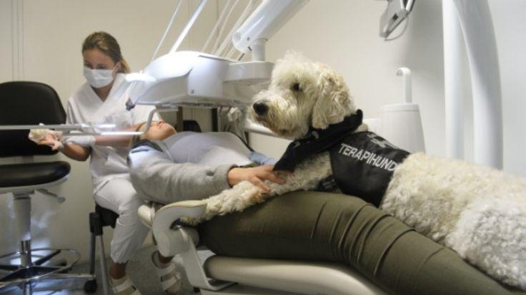 Mange gruer seg til å gå til tannlegen, men terapihunden Barley skal gjøre frykten mindre.