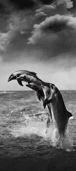 Playful dolphins photo: Praveen Godara on Picasa