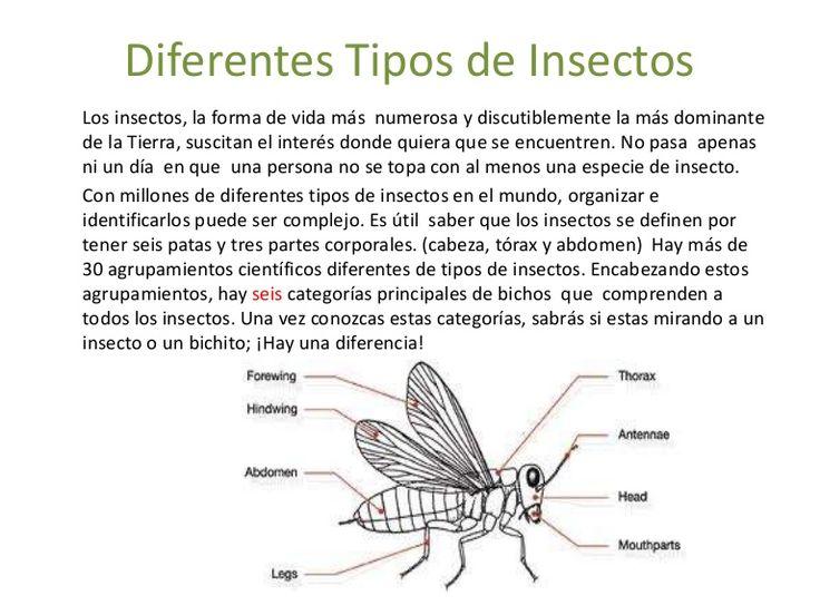 Clasificación de los diferentes ordenes de insectos.