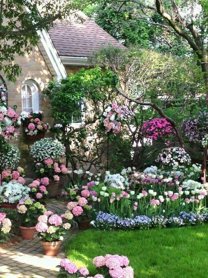 Oltre 25 fantastiche idee su piante da ombra da giardino - Piante giardino ombra ...