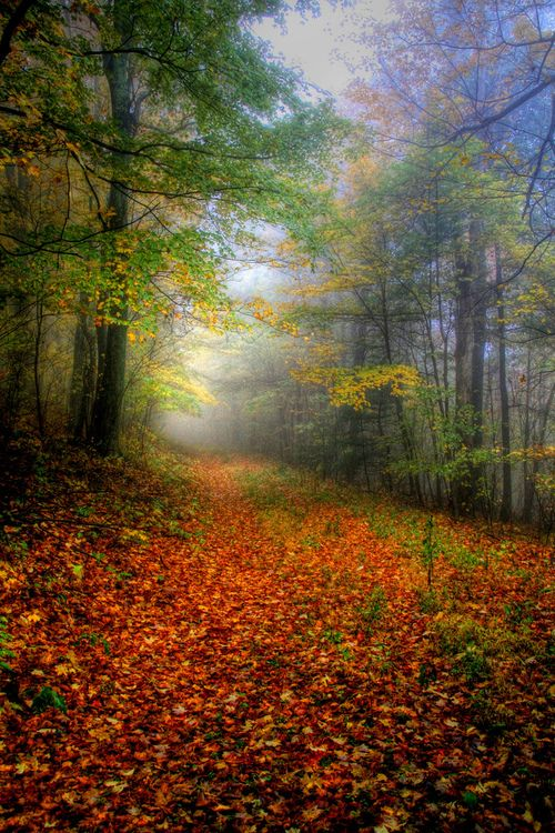 Path to Enlightenment (by ☩ D L Ennis)