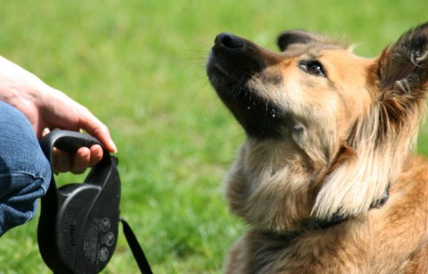 10 Useful and Easy Dog Obedience Training Tips