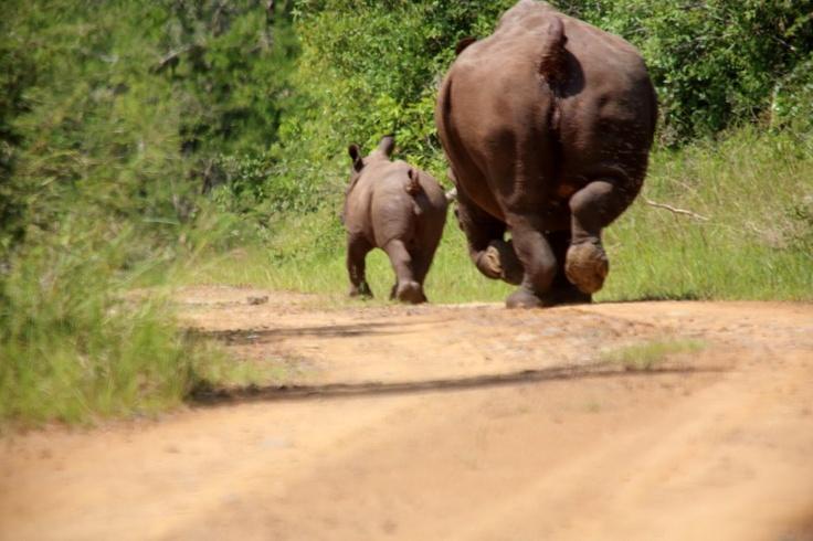 Mom & baby on a jog: WHY YOU MAKE FUN OF ME?