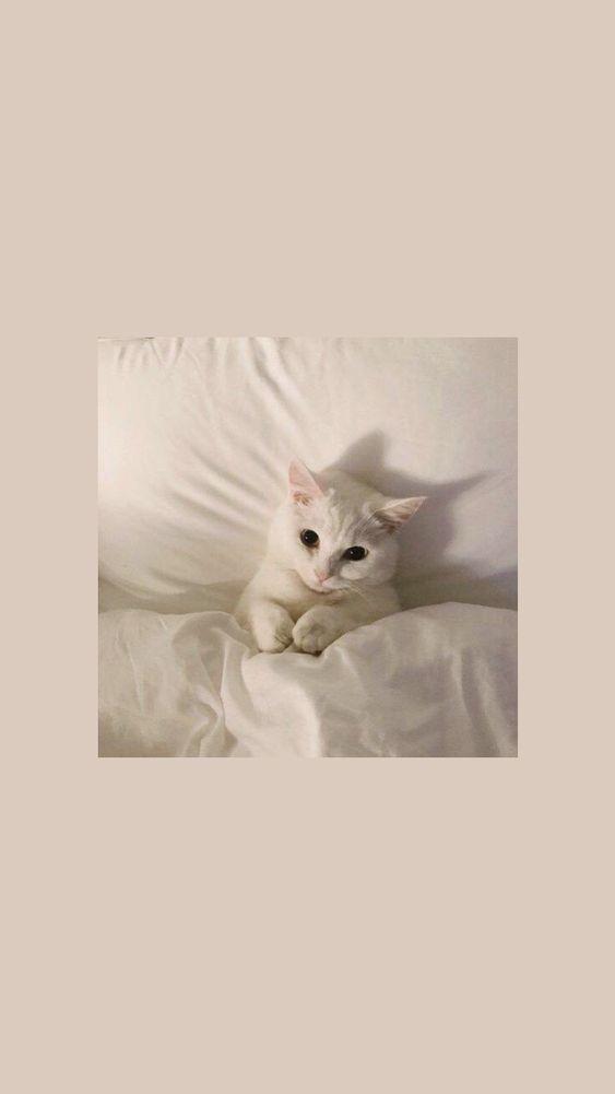 Lazy Cat Mywalls Cute Cat Wallpaper Cat Wallpaper Cat Aesthetic