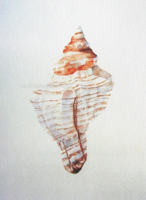 watercolor shell - Carol Sapp. I like how the shadows are so delicately made, yet still shows the form.