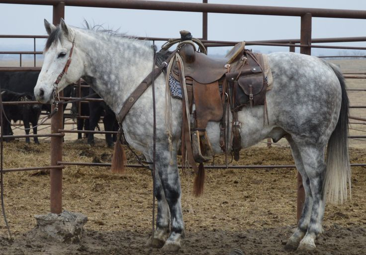 Big, Stout Finished Ranch Horse for Sale - For more information click on the image or see ad # 40252 on www.RanchWorldAds.com