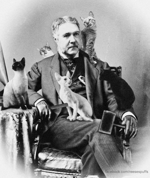 21st President Chester A. Arthur with cats....well, he is now my favorite president. I wonder where his presidential library is...