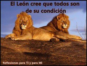 Imágenes-de-reflexión-con-leones-feroces-300x226