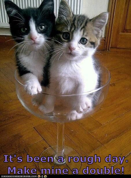 I Can Has Cheezburger? - Page 20 - Lolcats n Funny ...