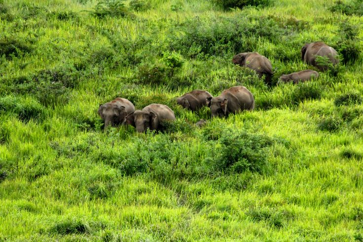 Wild elephants can be spotted in Khao Yai National Park, northeastern Thailand © Bigman365 / Getty Images