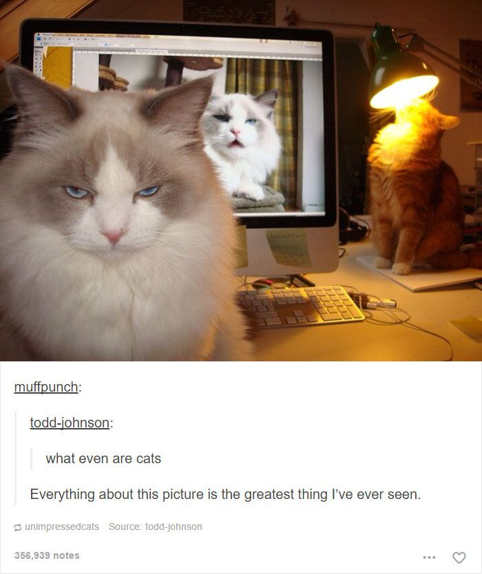 Best Amusing Animal Pictures Images On Pinterest Animal - 20 cat posts on tumblr that are impossible not to laugh at