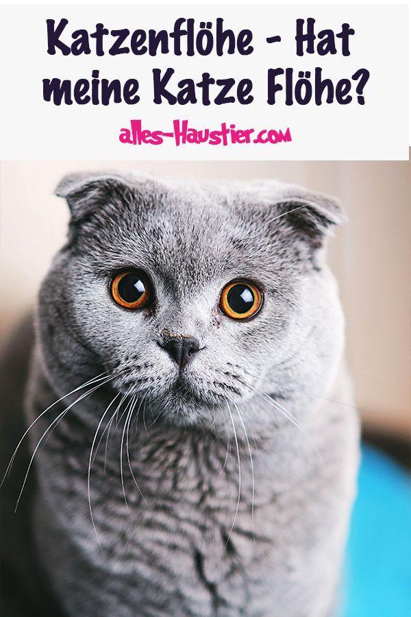 Katzenflöhe Flöhe bei Katzen und in der Wohnung bekämpfen