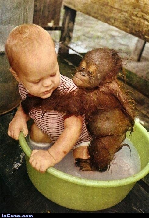baby orangutan - we have got to save these animals. DO NOT USE PRODUCTS WITH PALM OIL!!! this is whats killing these innocent animals.