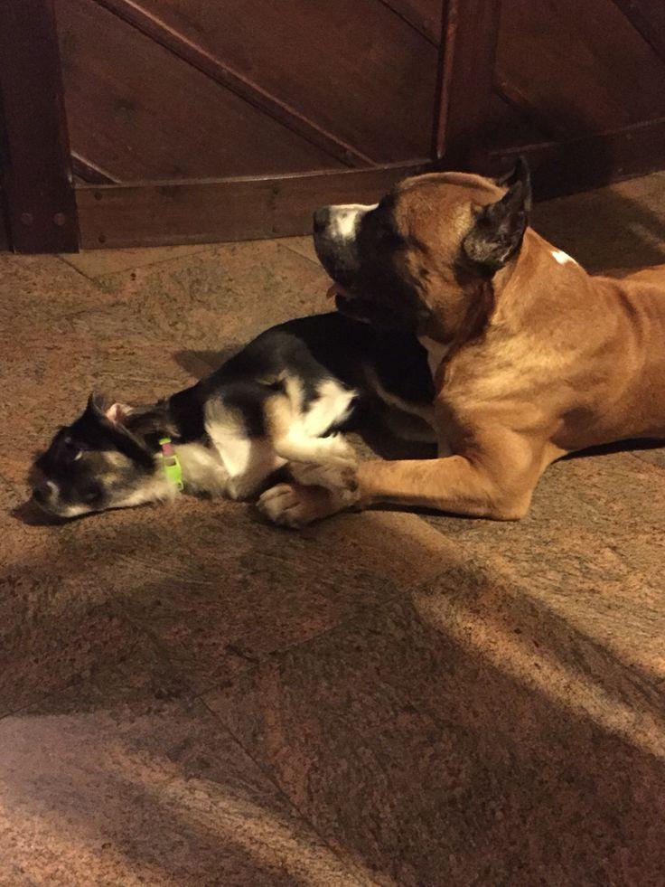 Masha + Hector
