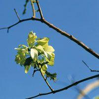 Los bosques secos tropicales pierden sus hojas en la temporada de verano.