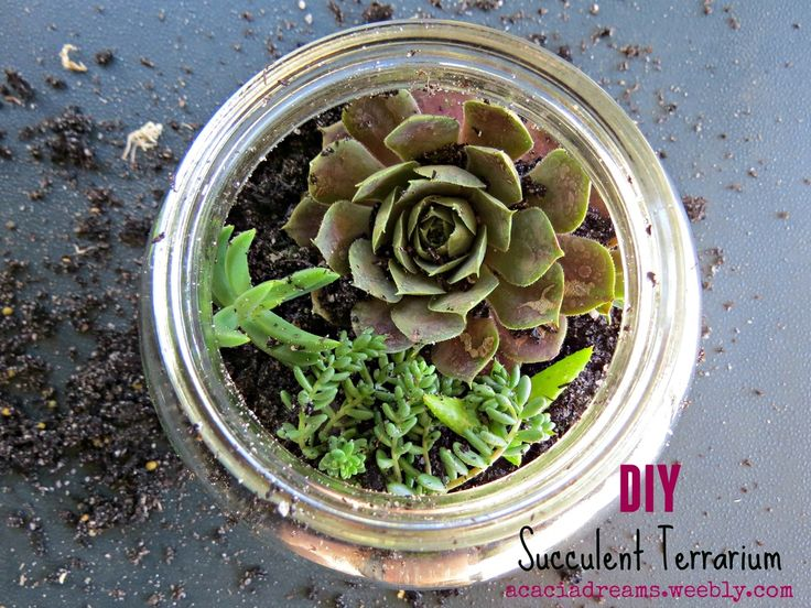 How to make your own succulent terrarium | acaciadreams.weebly.com