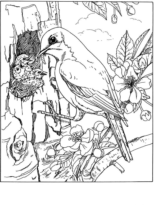 Omeletozeu With Images Coloring Pages Nature Bird Coloring