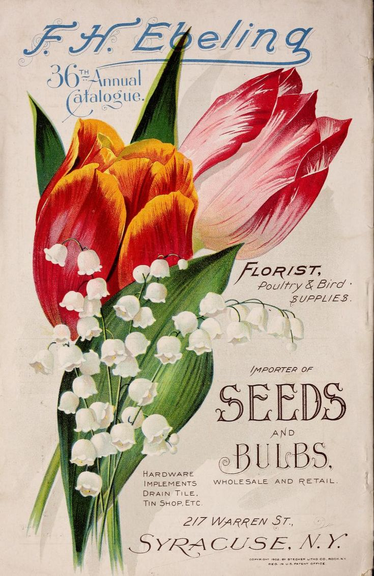 Scheepers Kitchen Garden Seeds 17 Best Images About All Things Gardening Seed Packet On Pinterest