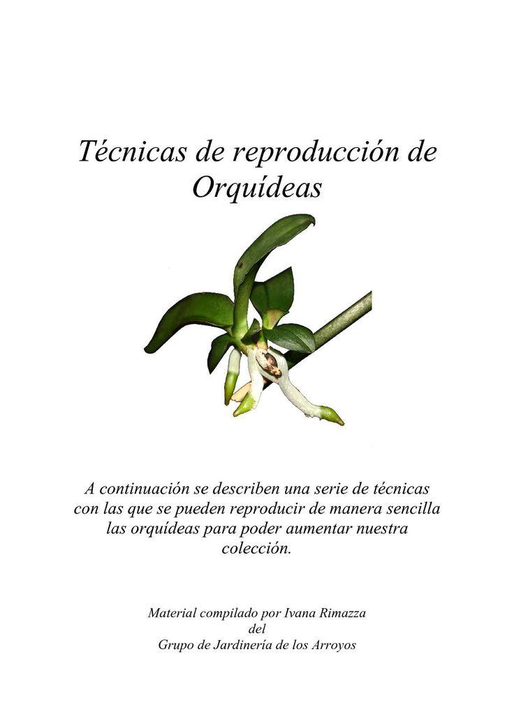 Las 25 mejores ideas sobre orqu deas dendrobium en for Cuidado de las orquideas moradas