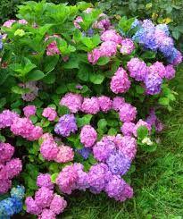 Süs bitkileri çiçekler doğadan ile ilgili görsel sonucu