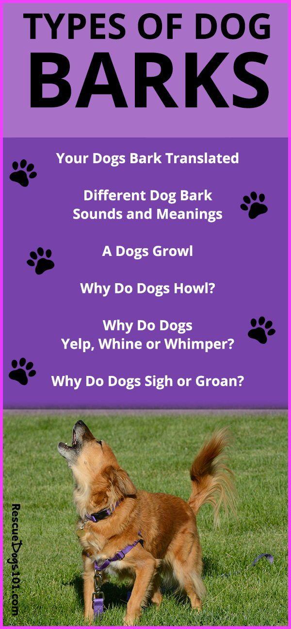 Types Of Dog Barks Types Of Dogs Dogs Dog Barking