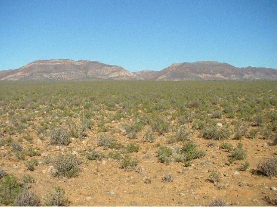 BGIS » Maps » Little Karoo Vegetation