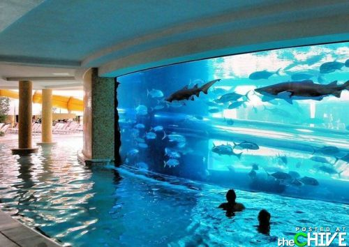 "Water slide through the shark tank at ""The Golden Nugget"" & swim in the pool surrounding the shark tank."