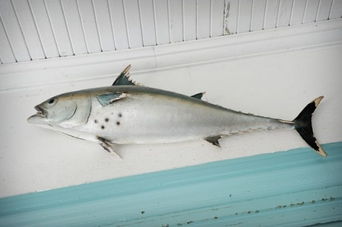 Love this...fish in screened in porch, Cape Cod