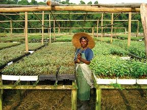 Développement durable au cœur de la forêt africaine http://www.radioethic.com/les-emissions/news-ethic/fondation-albert2/le-jardin-botanique-du-bassin-du-congo.html