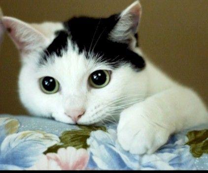 Život s kočkou: Paničko, mám tě rád(a)!