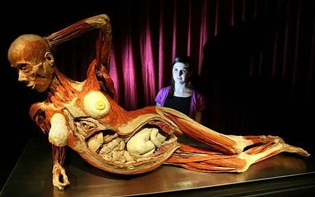 "Gunther von Hagens ""Body Worlds"". Real human bodies posed using ""plastination"". STILL wish I had seen this when it came to Florida."