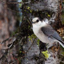 winter birdwatching ontario