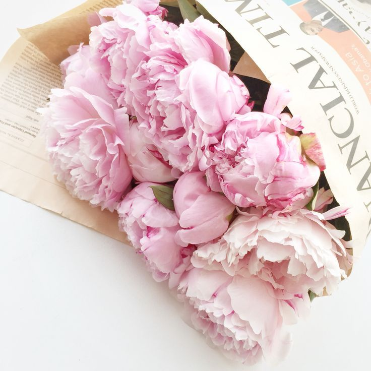 The Pink Peonies 311 best peonies images on pinterest | pink peonies, flowers and