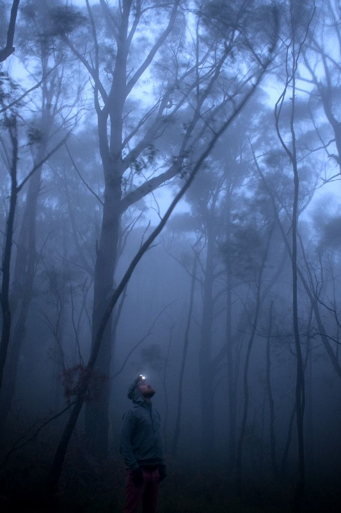 Fog in Adelaide Hills, just a beautiful picture.