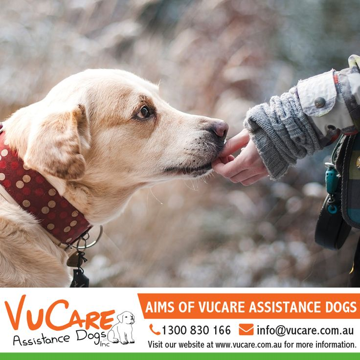 Aims of VuCare Assistance Dogs  The VuCare training program has been developed to help improve the quality of life and increase the level of independence and resilience for people with disabilities.  VuCare is committed to providing the highest level of training for our dogs in order to improve the lives of our clients and the dogs who care for them.    #dogs #pets #assistancedogs