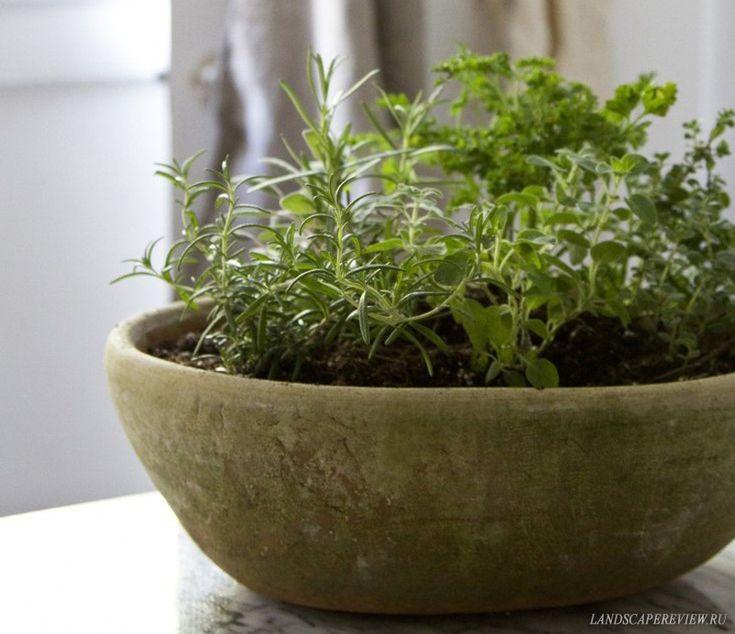 Как вырастить пряный сад