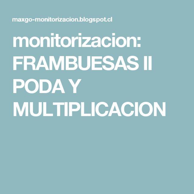 monitorizacion: FRAMBUESAS II PODA Y MULTIPLICACION