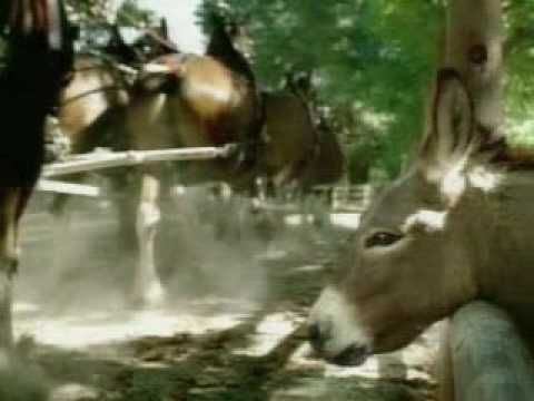 Budweiser Commercial - Clydesdales Donkey - YouTube