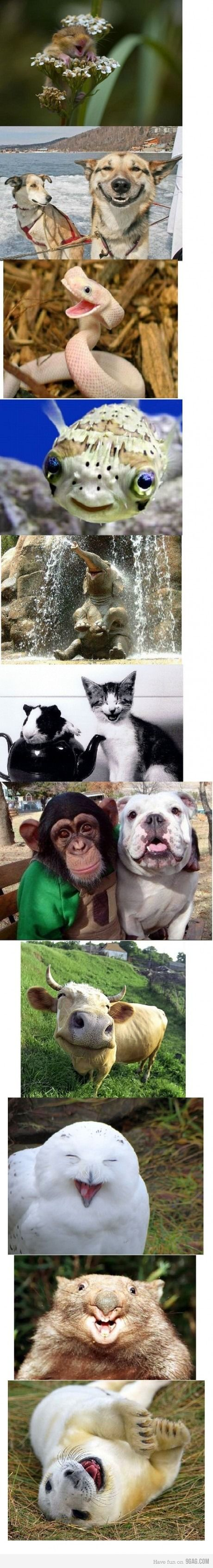 make a smiling animal collage