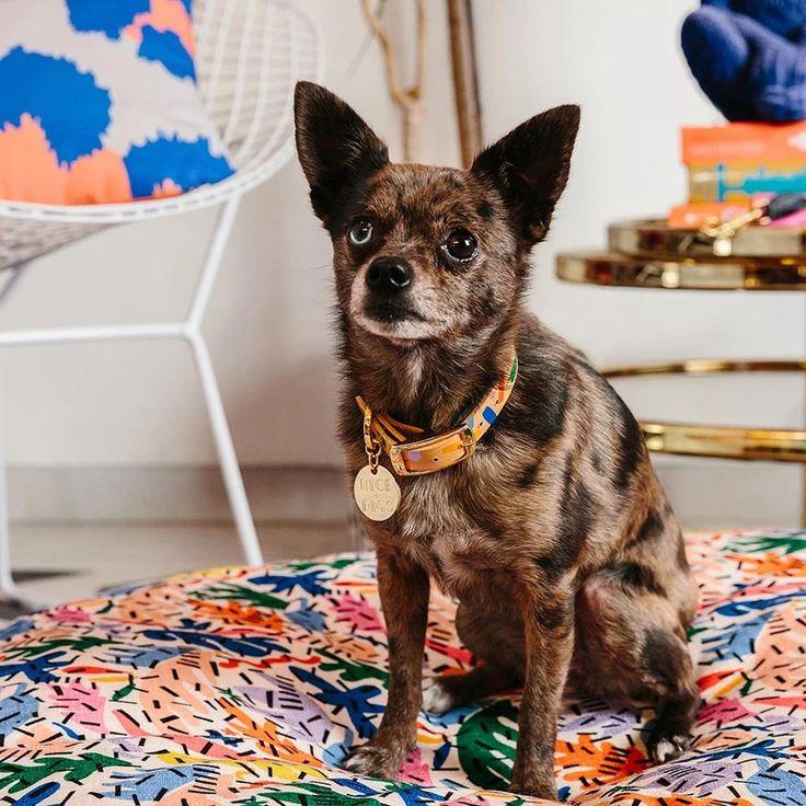 MEMPHIS CONFETTI LEATHER DOG COLLAR Leather dog collars