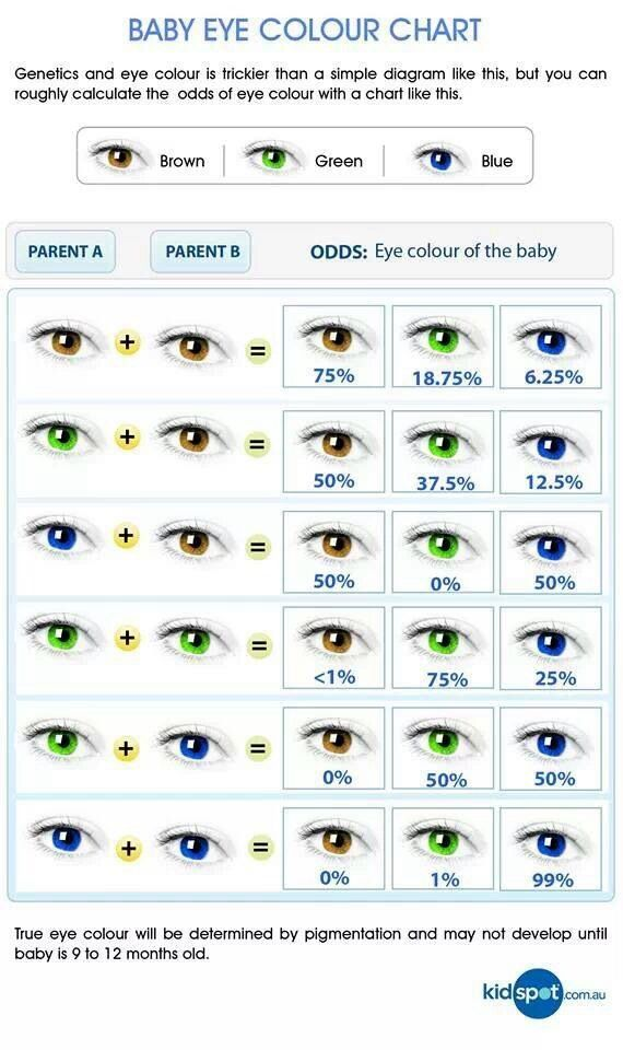 genetic eye color predictor chart, helps if working with parents and children characters - Google Search