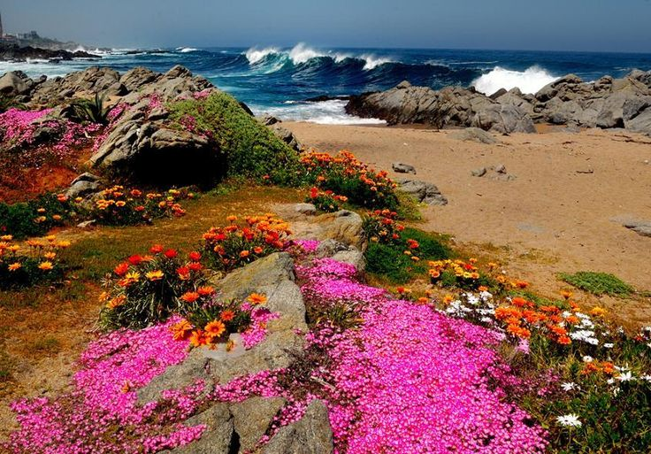 Flowers by the sea at Isla Negra, Chile