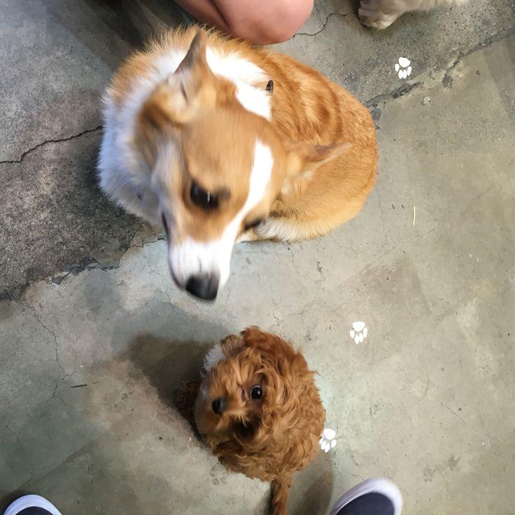 Doggie meet ups every week!
