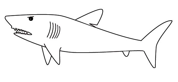 Line Drawing Shark : Shark line drawing tattoo pinterest sharks