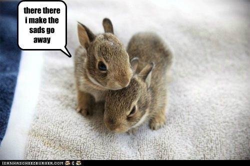 cute baby animals with captions | You Make EVERYONES Sads ...