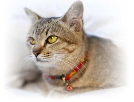 Cat Insurance & Kitten Insurance | Healthy Paws® Rated Best in 2015 and 2016!