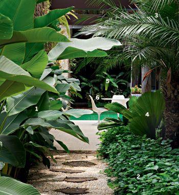 """A perspectiva é das melhores. Ao entrar nesta casa no bairro paulistano alto de Pinheiros, você será recebido por um caminho de helicônias (1), asistásias (2), palmeiras-fênix (3) e licualas (4). """"O frescor promovido por essas espécies deve-se não apenas à sombra, mas também ao fato de transpirarem bastante"""", explica o paisagista Gil Fialho. Debaixo dos pedriscos e pisadas de bolachas de eucalipto, chão de terra – outro segredo para abaixar a temperatura.  piscina.enfeitada por helicônias"""