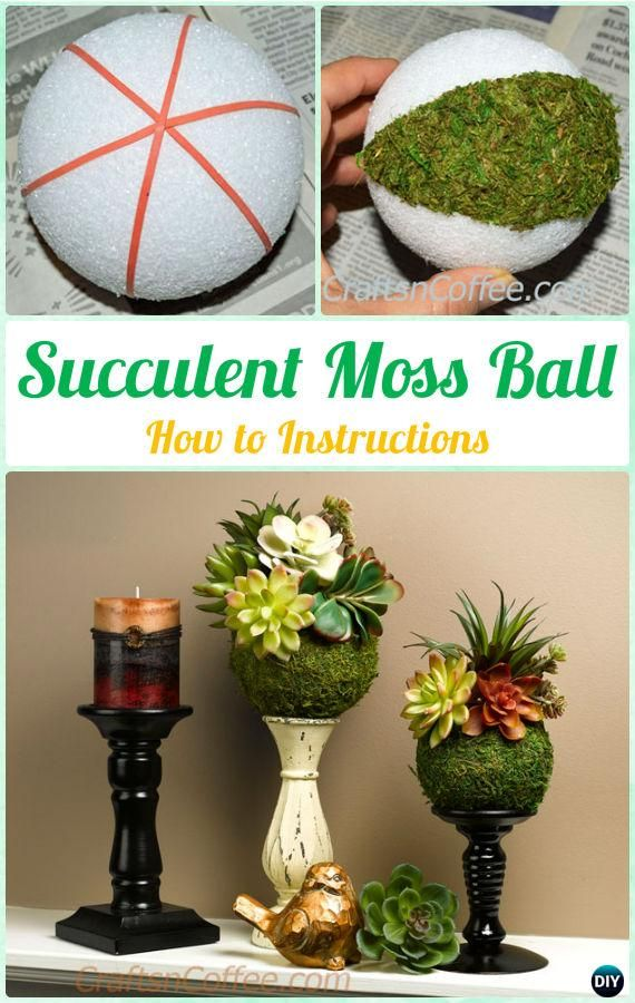 DIY Succulent Moss Ball Display Instruction- DIY Indoor #Succulent #Garden Ideas Projects