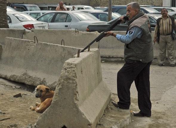 Pour l'Euro 2012 du foot, les autorités cherchent à se débarrasser des milliers de chiens errants qui vivent dans les rues des villes ukrainiennes. Théoriquement, les animaux sont transportés dans des chenils puis stérilisés, mais dans les faits, les associations affirment que ces bêtes sont massacrées.